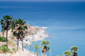 Ocean coast with palm trees — Stock Photo