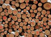 Felled trees — Stock Photo