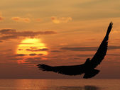 Eagle above ocean — Stock Photo