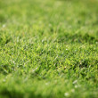 Green lawn - background texture — Stock fotografie