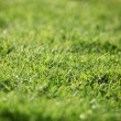 Green lawn - background texture — ストック写真