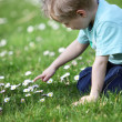 Little boy in a meadow — Stockfoto