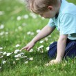 Little boy in a meadow — Stock Photo
