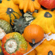 Many different pumpkins - Stock Photo