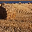 Corn field with bales of straw — Stock Photo