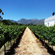 Stock Photo: Vineyard / winery