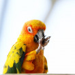 Colorful parrot — Foto de Stock