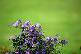 Green background with lilac flower — Stock Photo