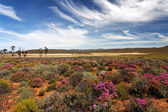 Landscape in South Africa — Stock Photo