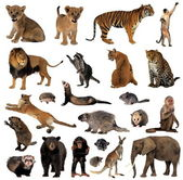 Animals — Stockfoto