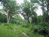 古代のオーク材の森. — ストック写真