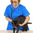 Veterinary — Stock Photo #3687850