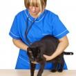 Veterinary — Stock Photo #3687850