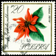 Vintage  postage stamp. Flower Poinsetia. — Stock Photo