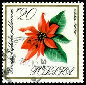 Vintage postage stamp. Flower Poinsetia. — Stock Photo