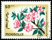 Postage stamp. The Flowerses amygdalus mongolica. — Stock Photo