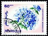 Postage stamp. The Flowerses caryopteris mongolica. — Stock Photo