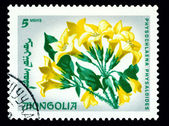 Postage . The Flowerses physochlaena physaloides. — Stock Photo