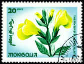 Postage stamp. The Flowerses thermopsis lanceolata. — Stock Photo