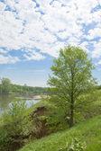 Дерево на фоне реки — Foto de Stock