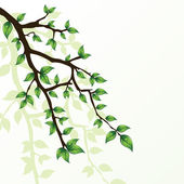 Branch of tree — Stockvektor
