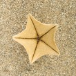 Starfish on sand — Stock Photo #3105852