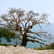 Tree in mountains — Stockfoto #3491310