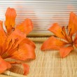 Orange tiger lily — Stock Photo #3491689