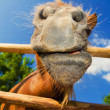 Funny closeup of a pony looking at the camera - Stock Photo