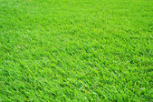 Texture of grass — Stock Photo
