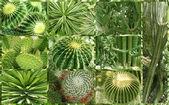 Cactus. — Foto de Stock