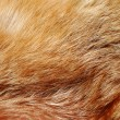 Royalty-Free Stock Photo: Red fox fur background texture