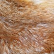 Red fox fur background texture — Stock Photo #2809599