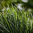 Night grass — Stock Photo