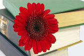 Pile of books with a flower. — Stock Photo