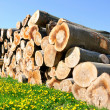 Woodpile. - Stock Photo