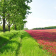 He is a red field. - Stock Photo