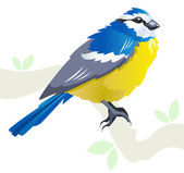 Blue tit vector — Stock Vector