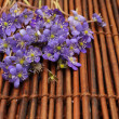 Violet flowers on a brown mat — Stock Photo