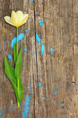 One flower on a wooden board — Stock Photo