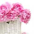 Royalty-Free Stock Photo: Romantic bouquet. Delicate pink peonies isolated on white backgr