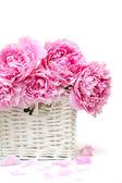 Romantická kytice. jemné růžové pivoňky izolovaných na bílém pozadí — Stock fotografie