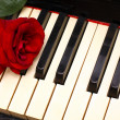 Romantic concept - deep red rose on piano keys — ストック写真