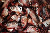 Cut fish heads — Stock Photo