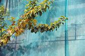 Debris netting branches — Stock Photo