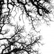 Foto Stock: Oak tree silhouette
