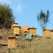 Photo: Beehives