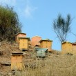 Beehives — Foto de Stock