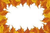 Javorové listy rám — Stock fotografie