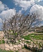 Tree, — Stock Photo